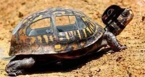 Che ne dite di questa tartaruga?